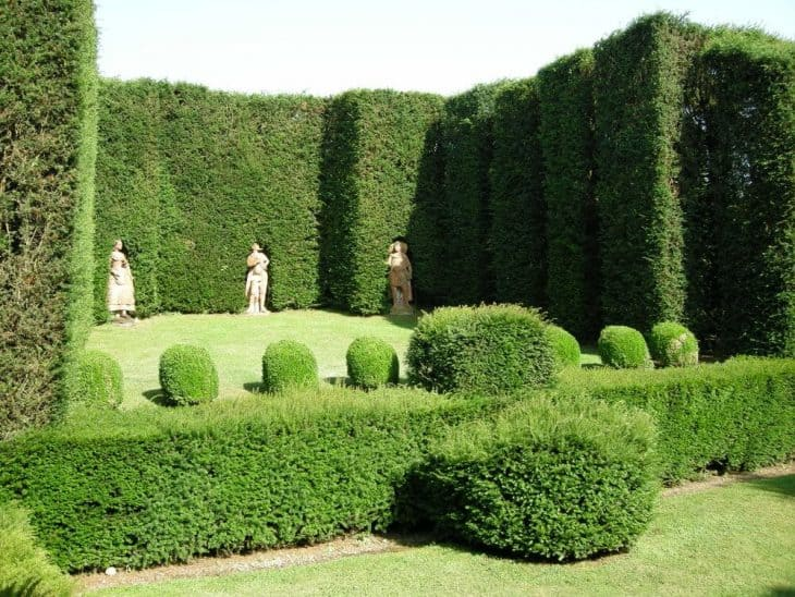 Evergreen Hedges Featured