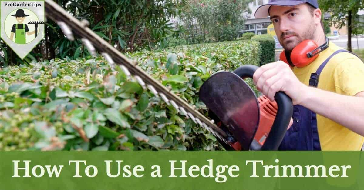 how to use hedge trimmer