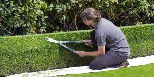 manual vs electric garden shears