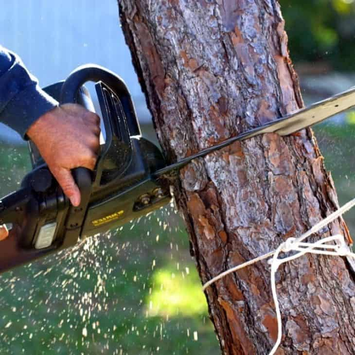 corded electric chainsaw felling tree