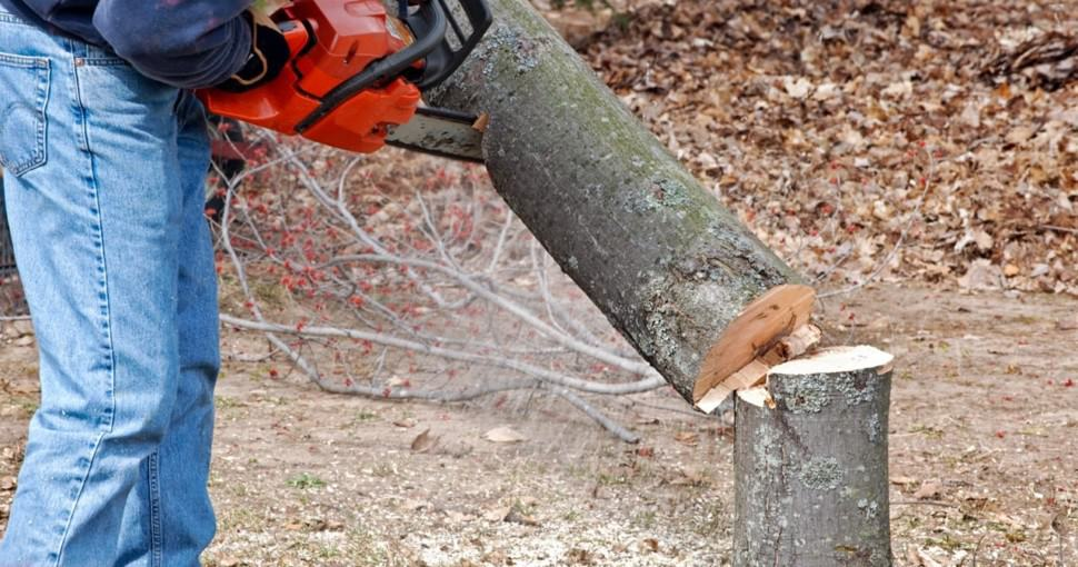 cut down tree with chainsaw