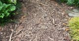 What to Do with Wood Chips from The Chipper?
