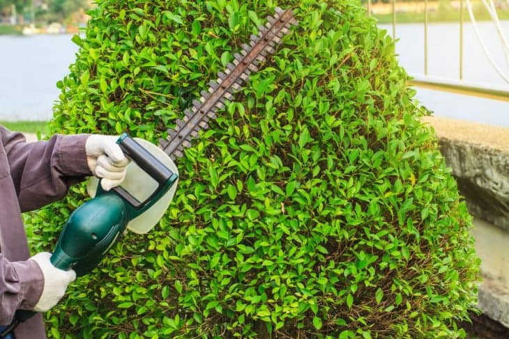 less strain with pole hedge trimmers