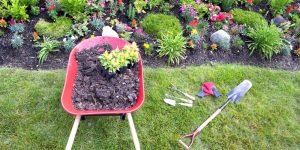 lawn edging equipment on lawn