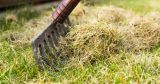 Does dethatching help your lawn