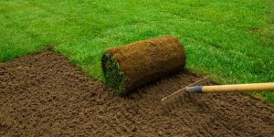 new lawn care tips