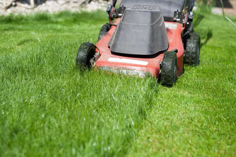 new lawn care mow often for good results