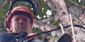 Timothy arborist