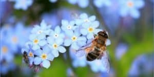 16 Types of Bees With Pictures - ProGardenTips