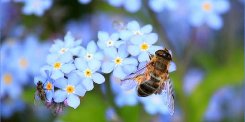How To Get Rid Of Bees Home Remedies