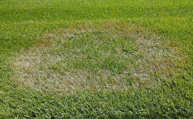 brown patch lawn disease in florida