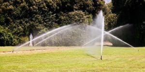 how to water your lawn the right way