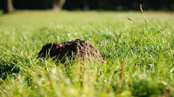single molehill in lawn