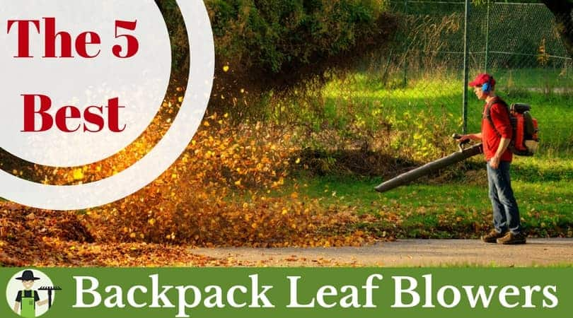 Best backpack leaf blower featured