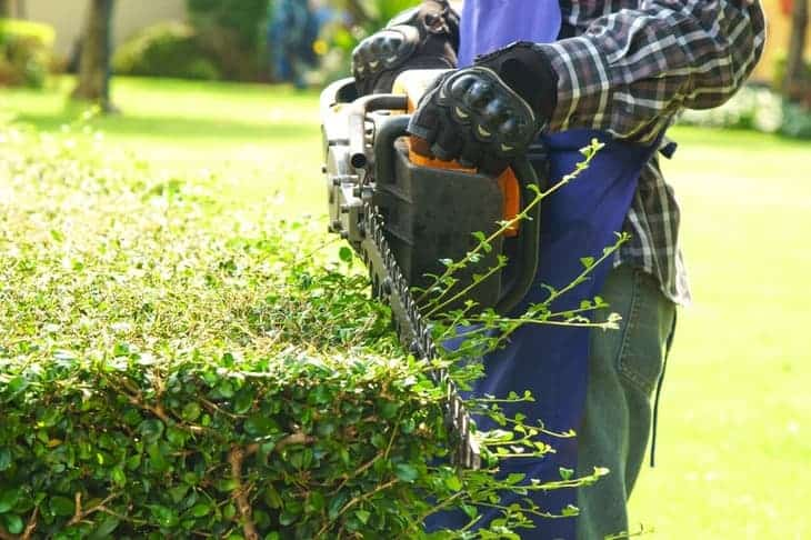 how to trim the side of the hedge