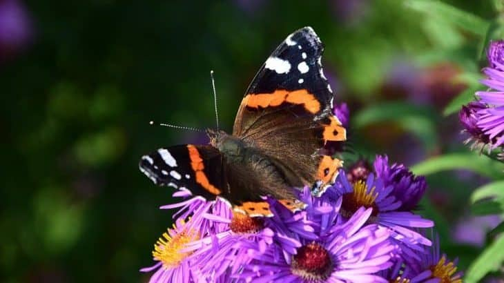 top plants to attract butterflies featured image