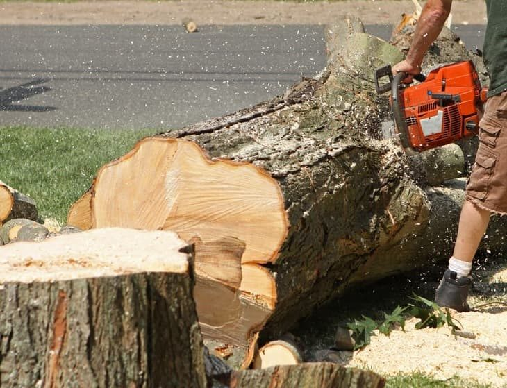 Chainsaw stuck in tree on the ground
