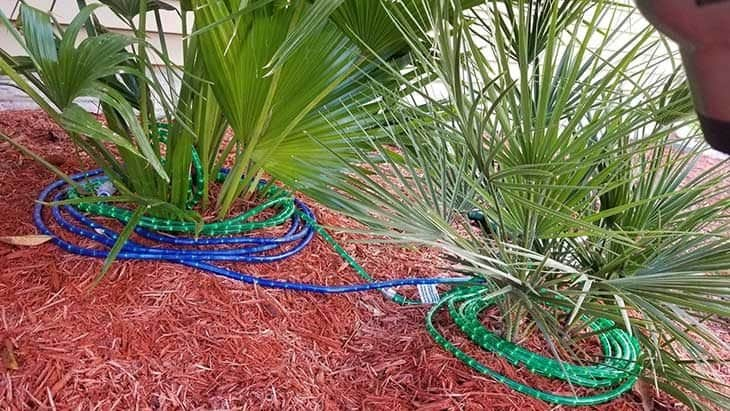 winterizing palm tree with christmas lights