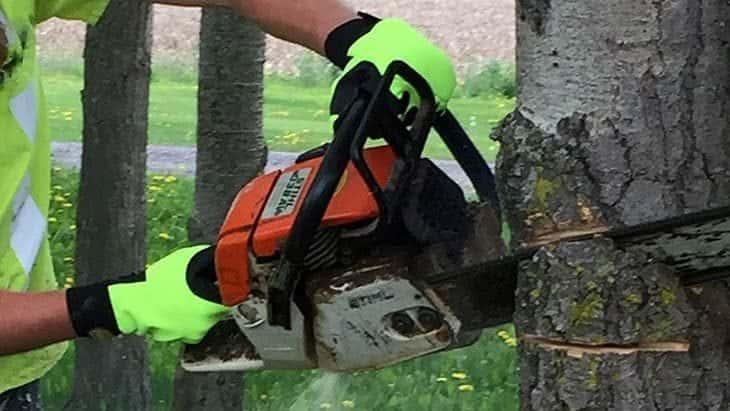 arborist using chainsaw gloves