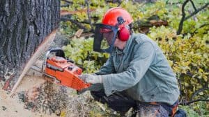 chainsaw helmet reviews featured