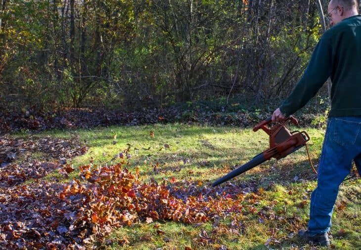 collecting leaves from lawn