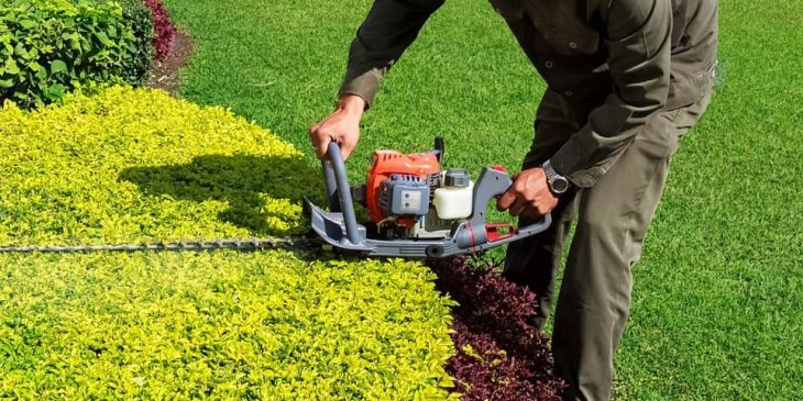 gas hedge trimmer buying guide
