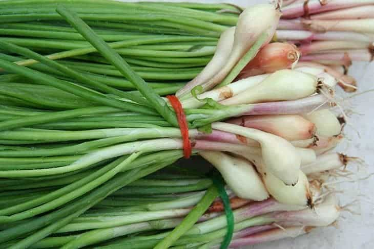 scallions or green onions