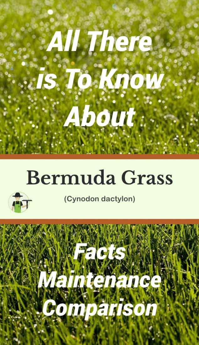 bermuda grass pinterest