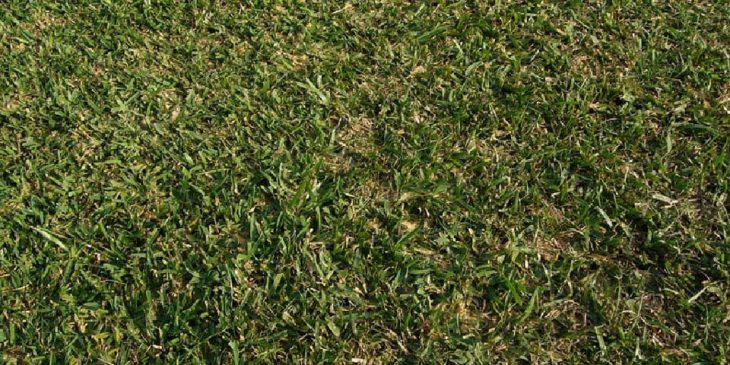 centipede lawn maintenance