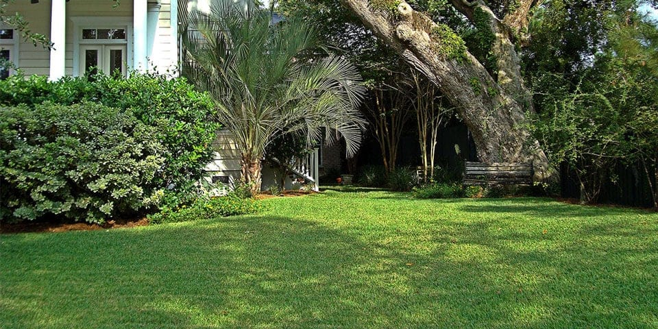 st augustine grass shade and sun