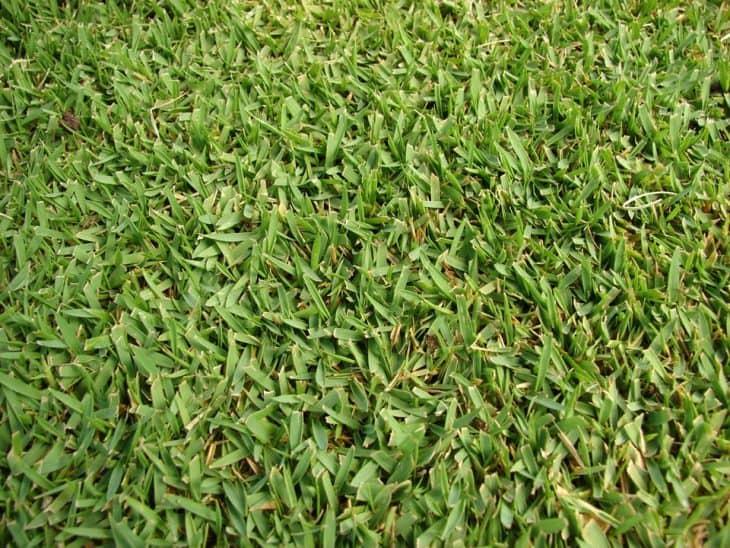 zoysia grass mowing