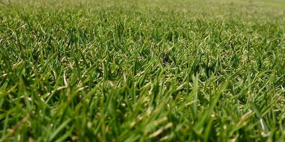 Zoysia grass vs other types