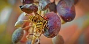 Eliminating Ground Nesting Bees (Recommended Methods) - ProGardenTips