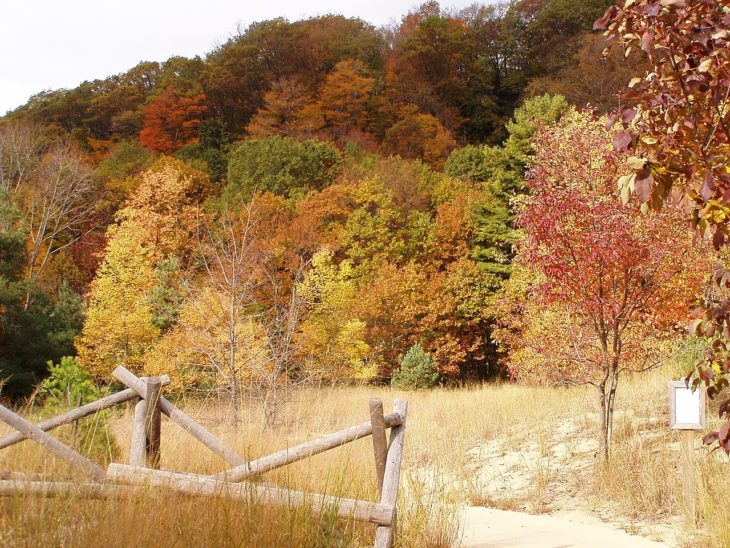 Beech Maple Forest in fall colors. Rosy Mound Natural Area Grand Haven Michigan