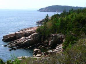 Coastal Pine trees in Massachusetts
