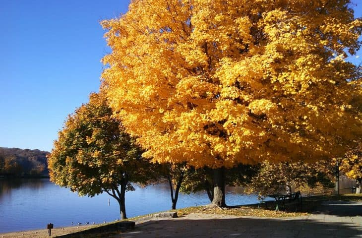 8 Different Kinds Of Maple Trees In Iowa Progardentips