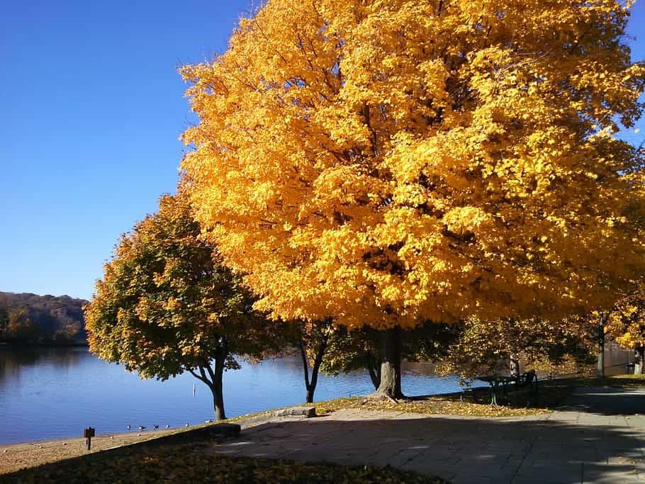 Fall colors of Maple trees at Lake MacBride in Iowa
