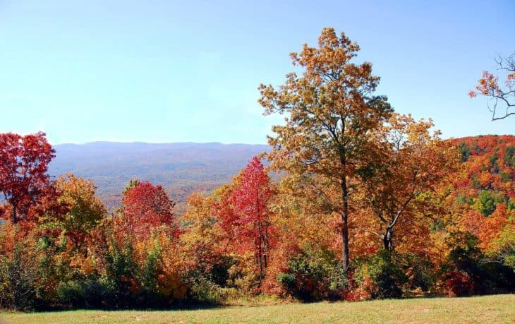 Fall colors on Maple trees in Northern Georgia