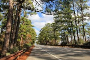 Lost Pines Forest along State Highway 21 in Bastrop County Texas