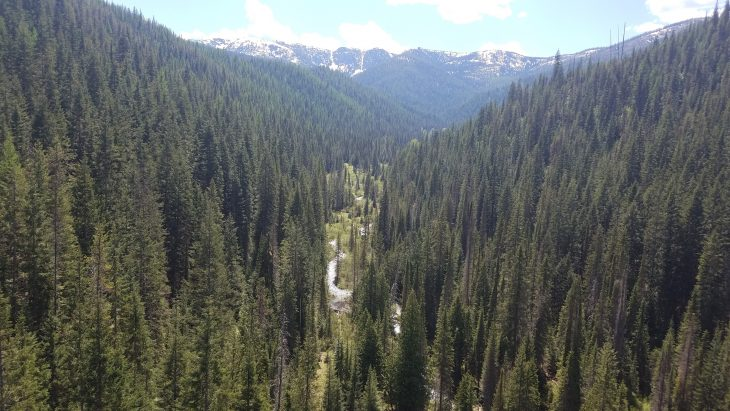 Pine tree landscapes in the Idaho Panhandle