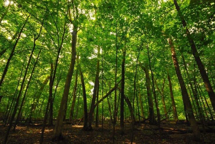 Waupun Park Maple Forest