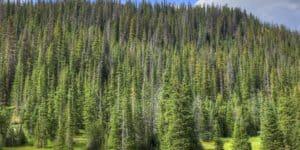colorado rocky mountains national park