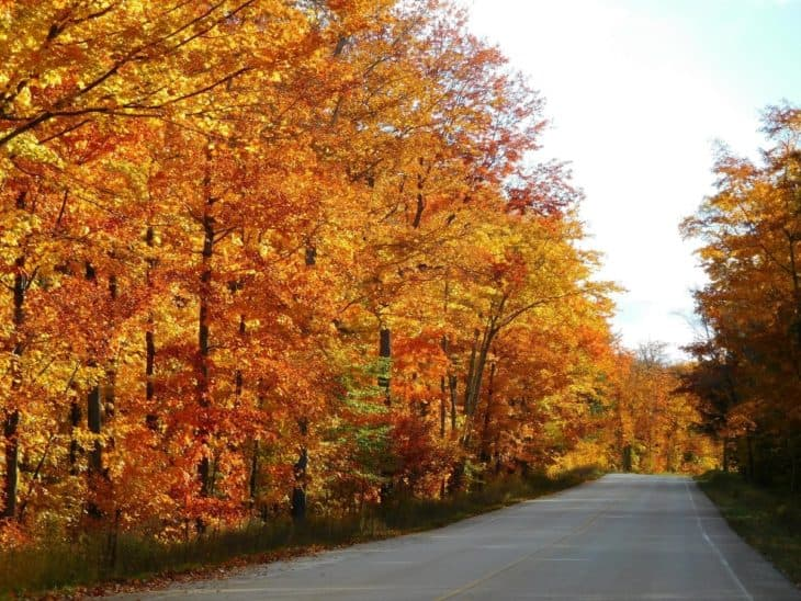 maple trees in maryland