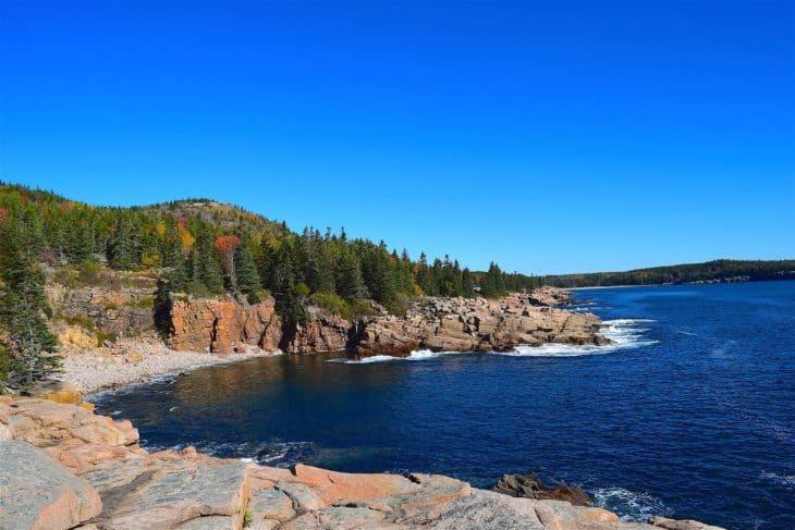 Coastal pine trees in Maine