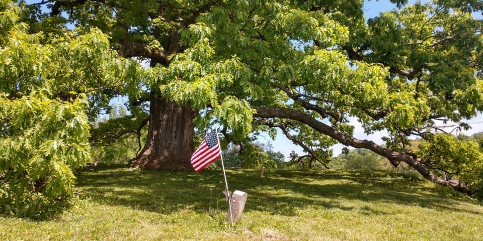 Great White Oak of Logan Ohio