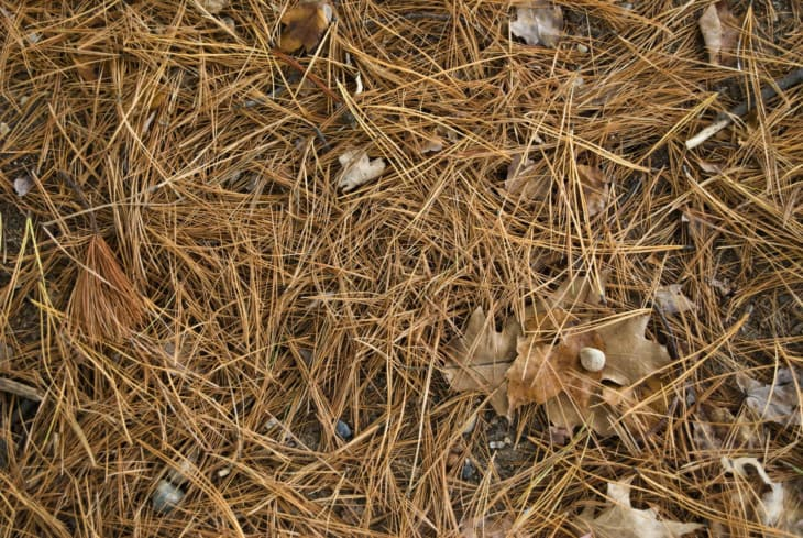 Fallen pine needles and leaves