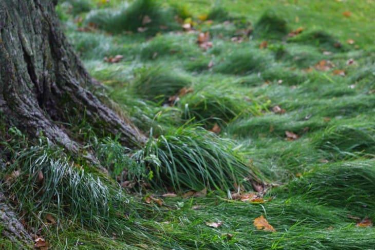 Grass near oak trunk