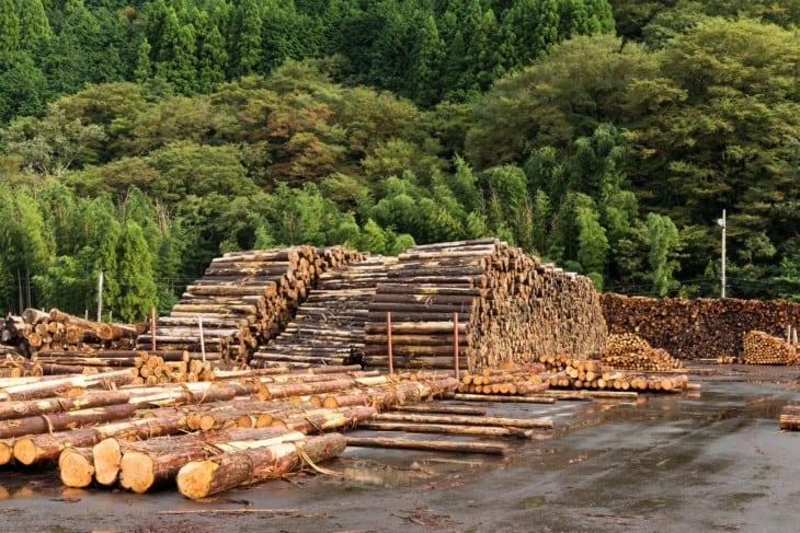 Pine lumber timber