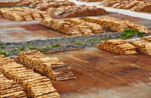 Timber export terminal New Zealand