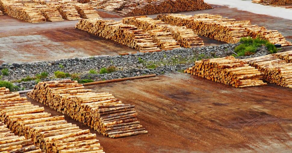 Timber export terminal New Zealand